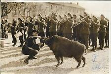 PHOTO PRESSE MEURISSE + fév 1938 + ANTIBES CHASSEURS ALPINS, SANGLIER ET FANFARE