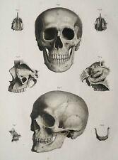 ODD BIZARRE STRANGE WEIRD CREEPY CRAZY FREAKY Skulls On Shelf Bones VINTAGE PIC