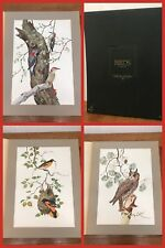 3 Robin Hill BIRD Prints 27 X 20 ORIOLE OWL WOODPECKER w/ Case Signed 1974