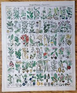 Oken Originaldruck Folio Koloriert Botanik Rhododendron etc. (T14) - 1843#