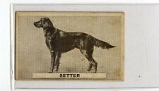 (Jb3051-100)  SWEETACRE,FAVOURITE DOGS,SETTER,1932#41