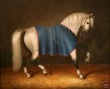 LMOP719 fine charmed fancy horse animal hand paint wall art oil painting canvas