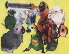 ABBA Green 92 Fine Grind Handfeeding Formula for baby birds - 5 lbs. bulk pack