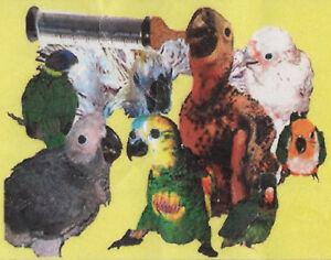 ABBA Green 92 Fine Grind Handfeeding Formula for baby birds - 15 lbs.-bulk pack
