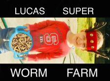 """100 Live Large Superworms """"1.5 - 2.0"""" Free Shipping"""