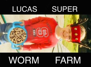 100 Live Large Superworms-Free Shipping