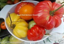 100 Large Mixed Heirloom Tomato Seeds Plus Free Angel Garden Seeds with Order