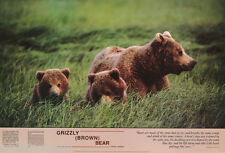 POSTER : ANIMALS: BEARS: GRIZZLY BEAR MOM & CUBS -  FREE SHIP #1937   RC33 H