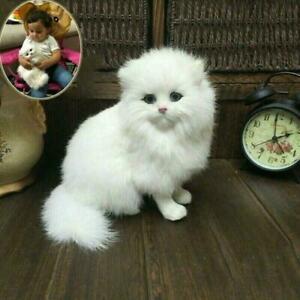 Realistische persische Katze Kinder und Kinder Kuscheltier Spielzeugpuppe