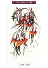 Original greeting cards (pkt 10) by artist Patricia Ball - Natives