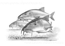 BARBEL On The Pellets Art Fishing Gift Present For Barbel Angler Fisherman New