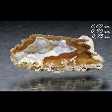Fossil Coral Agate Quartz Fossil Fossilized Tampa Bay Florida