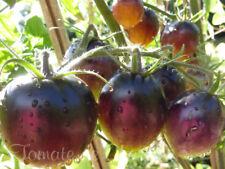 10 graines de tomate rare Kaleidoscopic Jewel unique tolérants au froid méth.bio