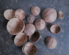 100% Natural Coconut Polished Shell