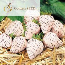100 semi FRAGOLA bianco dolce frutta biologica gustoso giardinaggio domestico IMPIANTO DI BACCHE