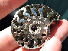 AAA Pyrite Ammonite Russian 73.40ct 42mmx30mmx5mm