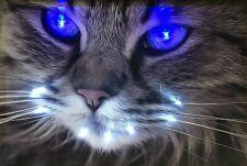 LED Bild Leuchtbild 65 cm x 45 cm Bilder Tiere Katze Wandbild Samarkand-Lights
