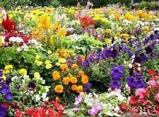 FLOWER PLANT SEEDS 5000 40g Wild Scented  Butterfly Bee Seed Pack Perennial Mix