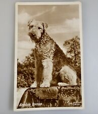 Vintage Airedale Terrier Dog Photo Postcard - 55875