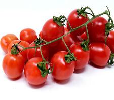 Tomato Tommy Toe *25 Seeds *  heritage  Vegetable tomato seeds