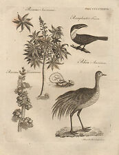 1797 Géorgien Imprimé~ Rhea Ramphastos Tuccan Ricinus Communis Ricinus