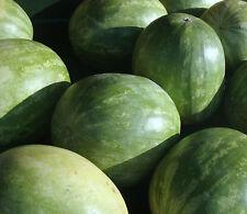 Wassermelone SUGAR BABY 10 Samen Citrullus Lanatus Wasser Melone