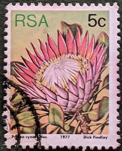Stamp South Africa 1977 5c Proteas species Proteas cynaroides Used