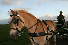 Ideal Equestrian, Eurotech Combi Harness, Shetland size, synthetic leather