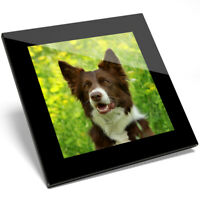 1 x Adorable Brown Border Collie Dog Glass Coaster - Kitchen Student Gift #8628