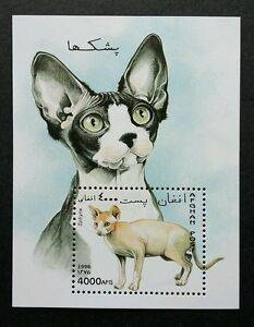 *FREE SHIP Afghanistan Cats 1996 Children Pet Animal Fauna (ms) MNH