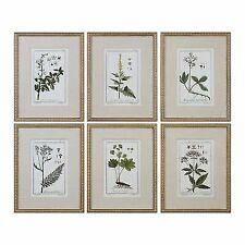 Uttermost 33651 Green Floral Botanical Study Prints S/6