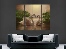 SWANS POSTER LAKE WATER NATURE IMAGE HUGE LARGE WALL ART PRINT