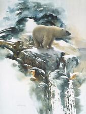 MORTEN SOLBERG - NOMAD OF THE ICE - POLAR BEAR