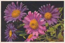 CALLISTEPHUS CHINENSIS -  Flower Postcard  ( L25 )
