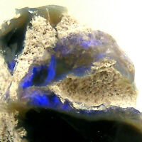 Lightning Ridge Opal with Blue Purple Fire NSW Australia Unpolished 3ct 12mm