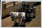 D3634aps Australia WA El Caballo Blanco Stallions in Harness postcard