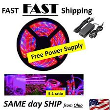 5050 SMD Red Blue 5:1 Waterproof LED Plant Grow Hydroponic Aquarium 5M Lighting