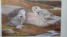Richard Evans Younger, Snowy Owl, S/N Print