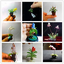 100PCS Rare Mini Orchid Seeds Seed Flower Phalaenopsis Indoor Miniature Garden