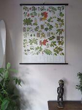 VINTAGE Pull abbassa botanico scuola tabellone POSTER DI ALBERI & Foglie