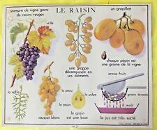 Set de Table Affiche Scolaire Vigne 21x30 cm Raisins Rouges Muscat Blanc Rafle