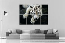 White tiger TIgre Blanc  Home DECO  Wall Art Poster Grand format A0 Large Print