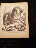 Antique Book Print  - The Lion Sits On The Hunter- 1894
