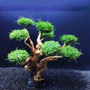 Aquarium Moss Tree Driftwood Fish Tank Landscaping  DIY Decoration Ornament