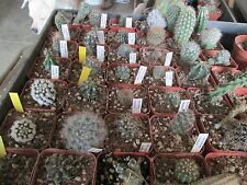"Catus - Group of 6 Cactus with names 2"" pots"