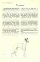 "The Greyhound - Vintage Dog Art Print - Matted ""G"""