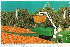 Postcard Florida Oranges by the Truckload Agriculture MINT c1970s-90s