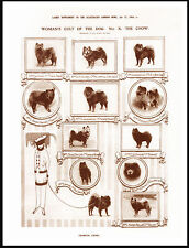 CHOW CHOW  LOVELY VINTAGE STYLE IMAGE WITH NAMED DOGS AND LADY  PRINT POSTER