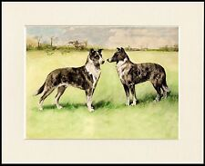 SMOOTH COLLIE TWO DOGS LOVELY DOG PRINT MOUNTED READY TO FRAME