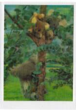 KOALA BEARS: 3-D animal postcard (C30136)